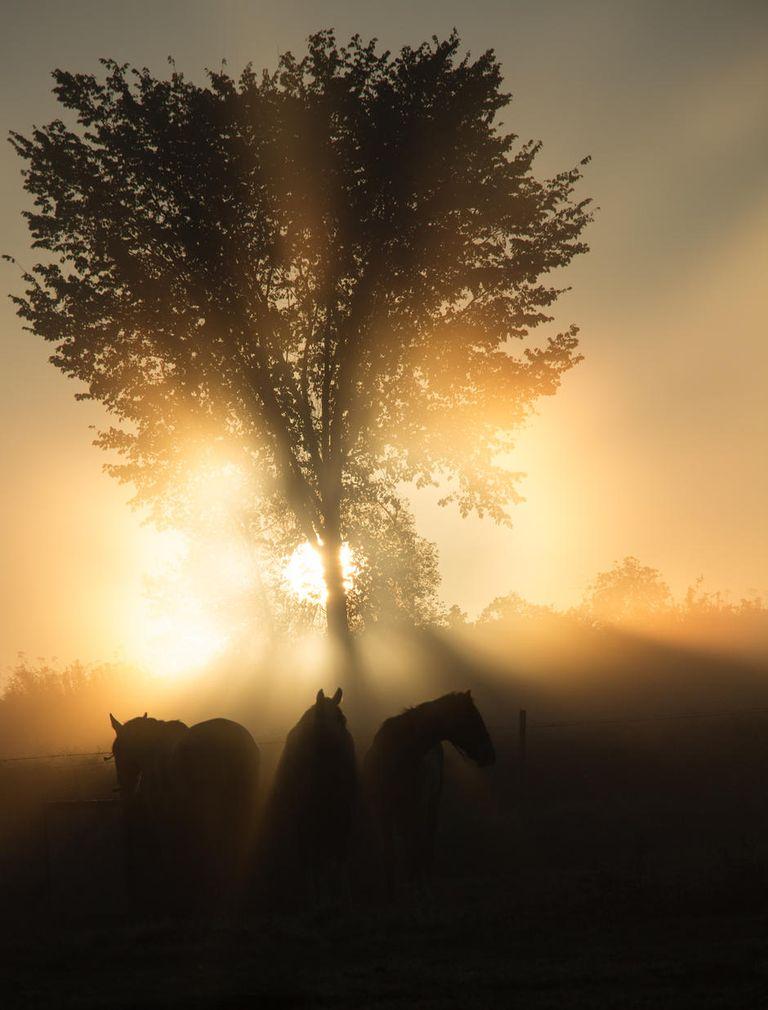 5-sunrise-behind-tree-horses-PHOTOCROWD-SUN