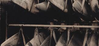 Photo 42 Collodion humide et autres procédés alternatifs