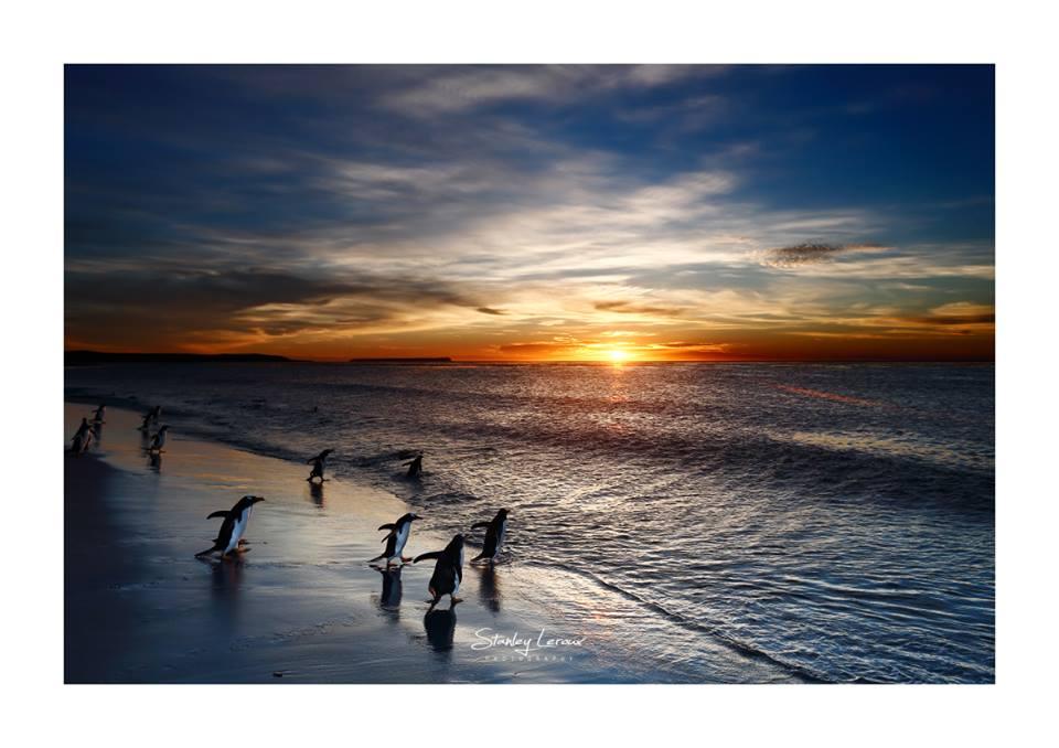 Iles Falkland