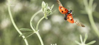 Speed flyers le vol des insectes révélé par Ghislain Simard