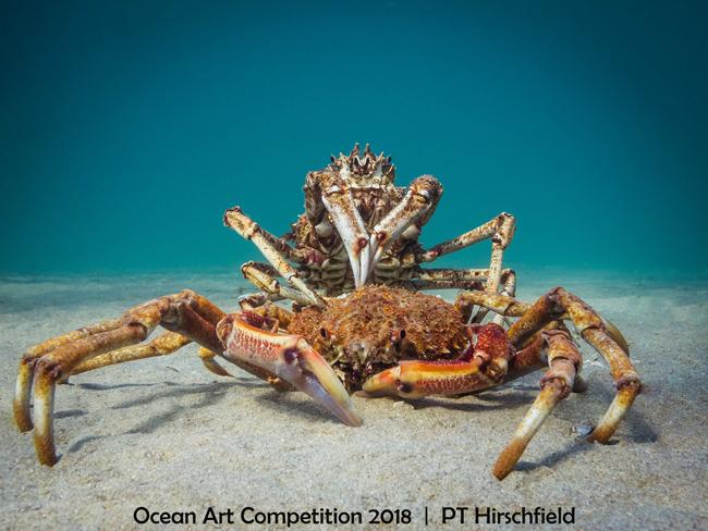 Ocean Art 2018 Araignée de mer