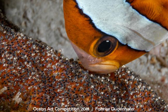 Ocean Art 2018 Poisson-clown de Clark