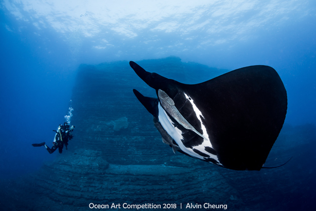 Raie manta océanique