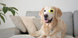 Nouveaux firmwares Nikon