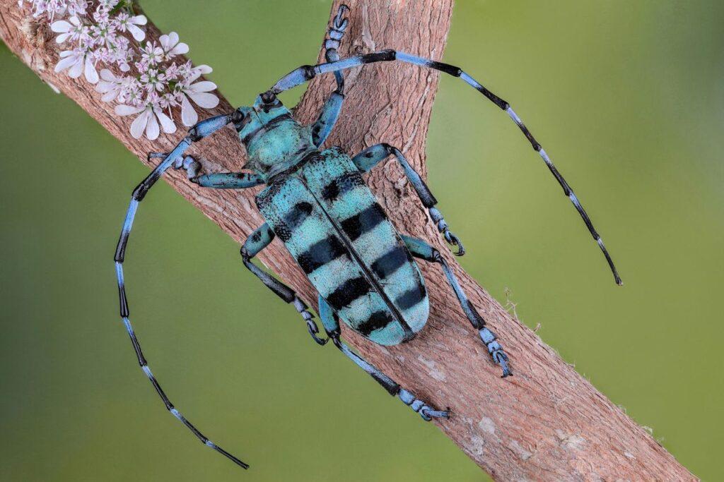 peur des insectes