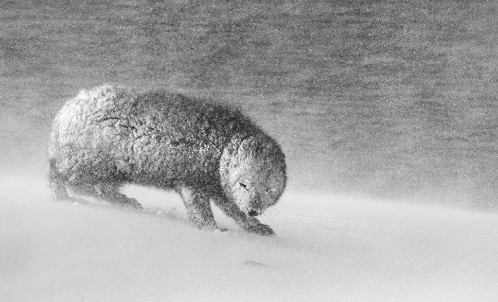 Pris dans le blizzard