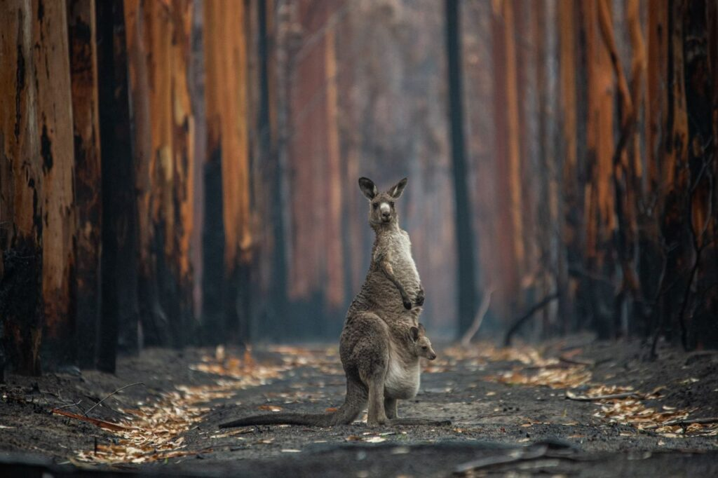 L'espoir dans la forêt brûlée