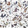Diversité des insectes