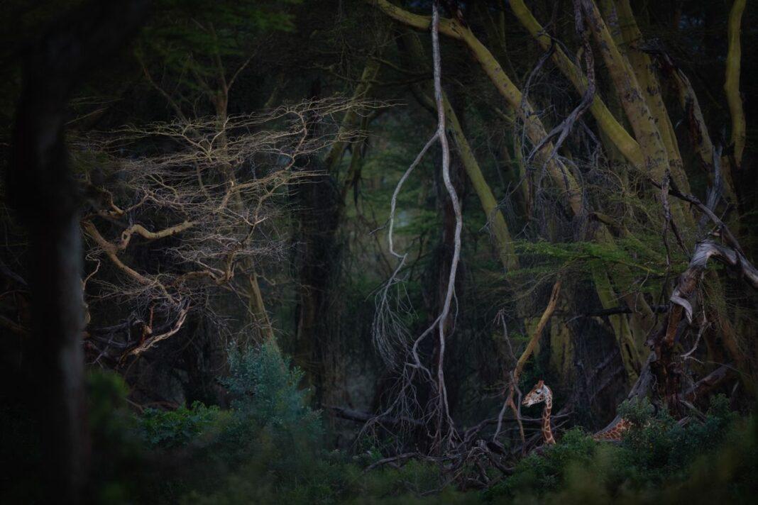 Photographies de Nature