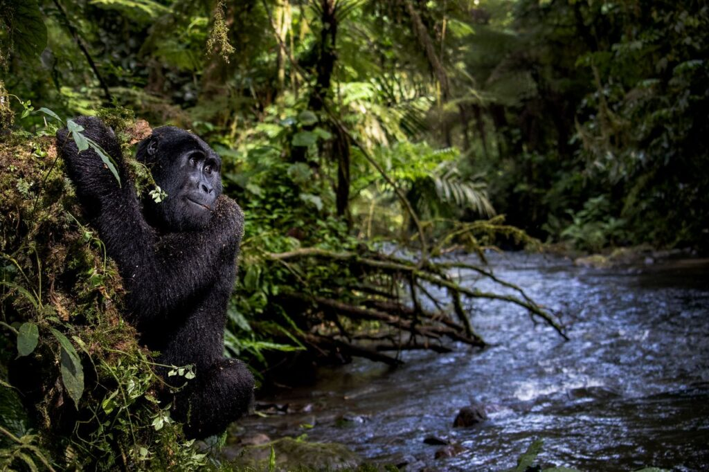 Clichés spectaculaires de la Faune sauvage : la lauréate Kathleen Ricker