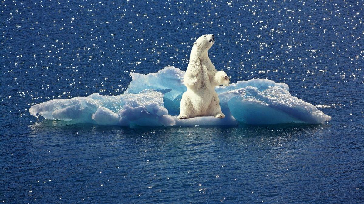 photographie sur le changement climatique